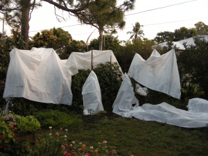 No ghosts, only tomato teepees, two days before Christmas.