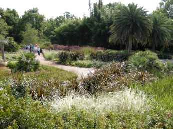 A savannah made of various ornamental grasses.