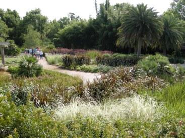 A savannah made of various ornamental grasses.