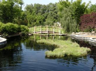 Oriental garden, floating water cleaning plants.