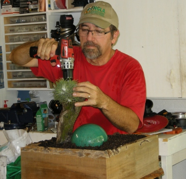 """I screwed the tillandsia ball into the """"tree"""" (an old pine root) and also anchored it from below."""