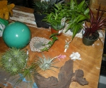 Design elements: ceramic ball, pond, dwarf Mondo grass, needlepoint ivy, pteris fern, various bromeliads, Mopani root, and fairies.