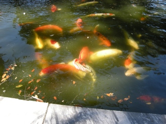 Koi fill the moat