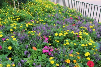 Complimentary colors: purple and yellow. Marigolds and angelonias.