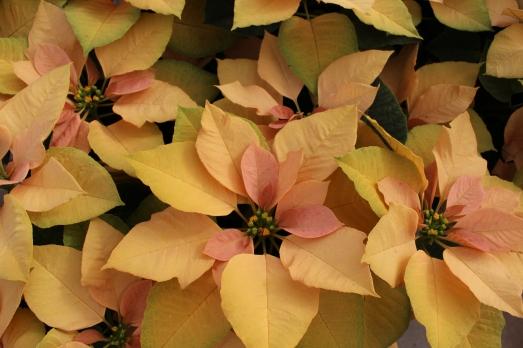 autumn leaves (3)