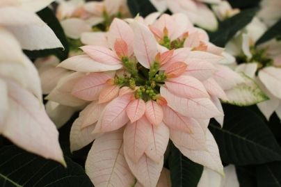 luv u soft pink