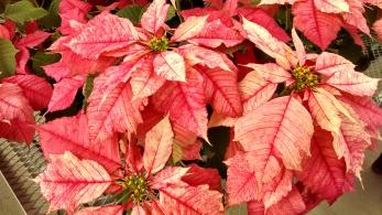 ruby frost (1)