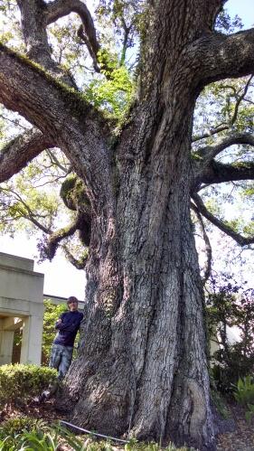 oak mature Jacksonville