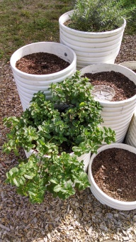 Perfect planting place for an aggressive plant like mint.