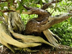 bonsai (12)