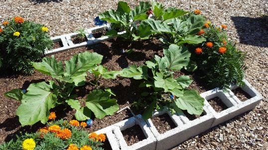 Students from after school program planted, watered, weeded and harvested tomatoes, peppers, egg plants and many flowers.