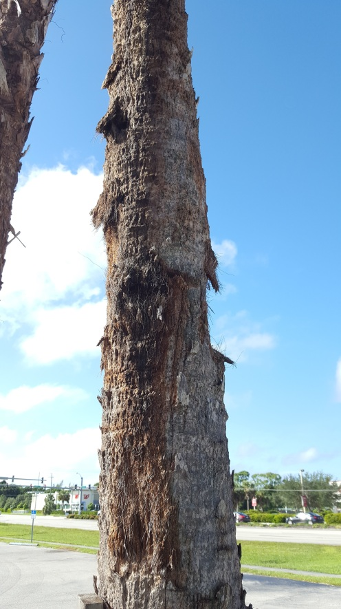 Several palm trunks showed damage from rough-handling.