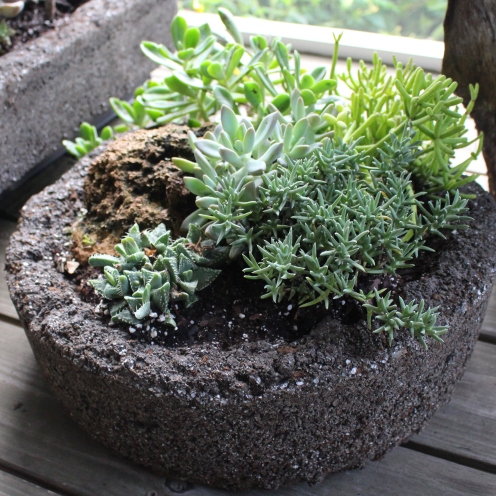 Pop it out, file it down a little, fill with well-drained soil and plant.