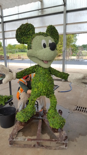 Topiary worker putting the finishing touches on Mickey.