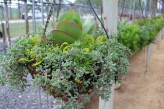 Got a dry spot? Hang succulents out to dry.