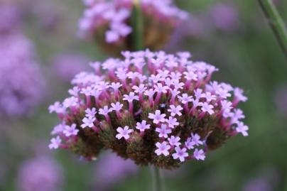 Pollinator plants were predominant: