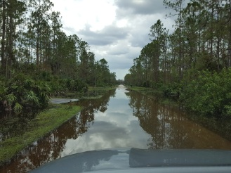 Road flooding in Golden Gate Estates.