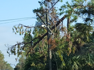 Wind sheered the tops of trees and power lines.