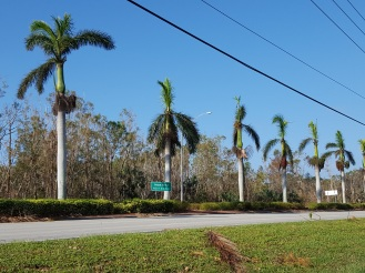 Royal Palms on Pine Ridge Road in Naples.