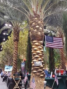 Big, beautiful Phoenix palms brought in by crane.