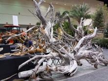 Massive driftwood: Florida Cedar.