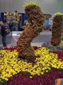 Marigolds and Coleus pillar.