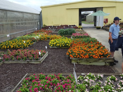 The Flower Trial beds at Walt Disney World nursery.