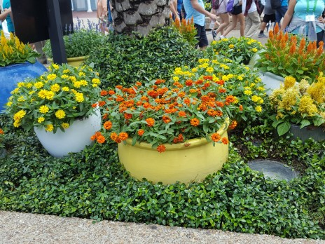 Warm colored pots and plants for a sunny summer day.